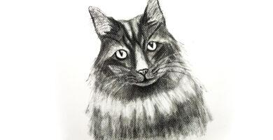 Gato realista dibujado a lápiz
