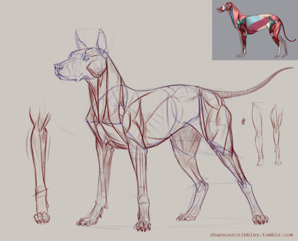 anatomia-perro-02