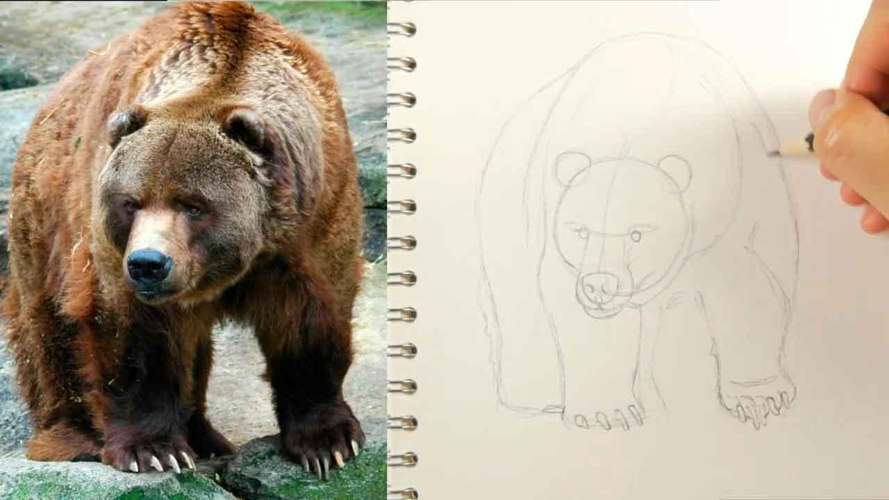 dibujo del boceto del cuerpo de un oso realista