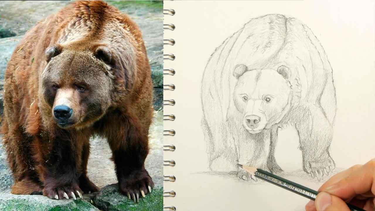 como dibujar el pelaje y las sombras de un oso