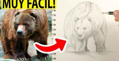 como dibujar un oso realista paso a paso